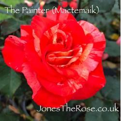 *The Painter (Mactemaik)