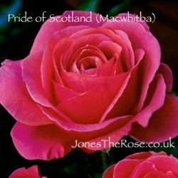 Pride of Scotland (Macwhitba)