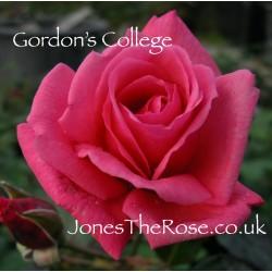 *Gordon's College (Cocjabby)