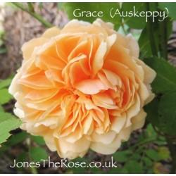 Grace (Auskeppy)