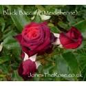 Black Baccara (Meidebenne)*