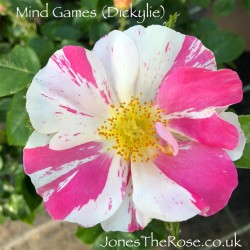 Mind Games (Dickylie)*