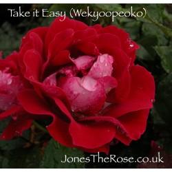 Take it Easy (Wekyoopeoko)