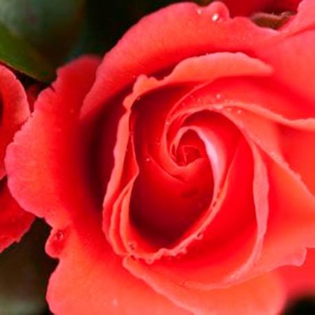 Precious Love (Kirlowo)