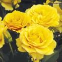 Doris Day (Wekmajuchi)*