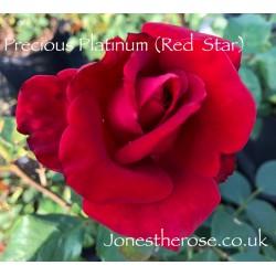 Precious Platinum (Red Star)