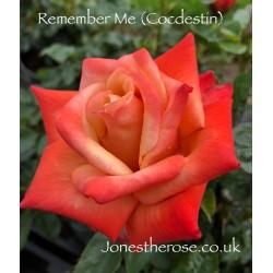 *Remember Me (Cocdestin)