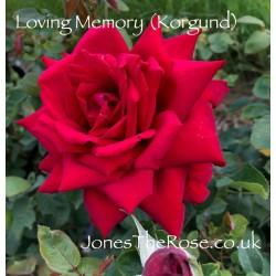 Loving Memory