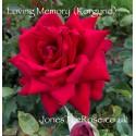 Loving Memory (Korgund)