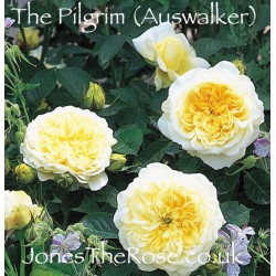 △*The Pilgrim (Auswalker)